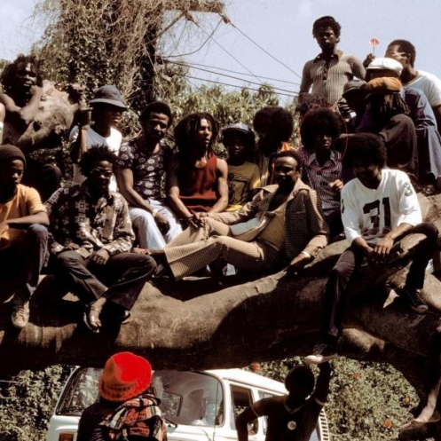 On that Tree